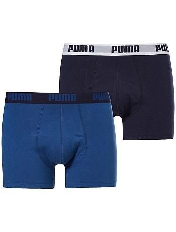 boxer puma